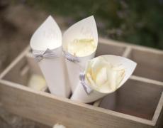 04-coni-petali-bianchi